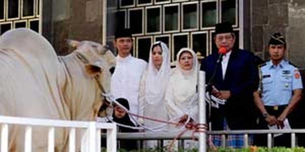 SBY kurban sapi
